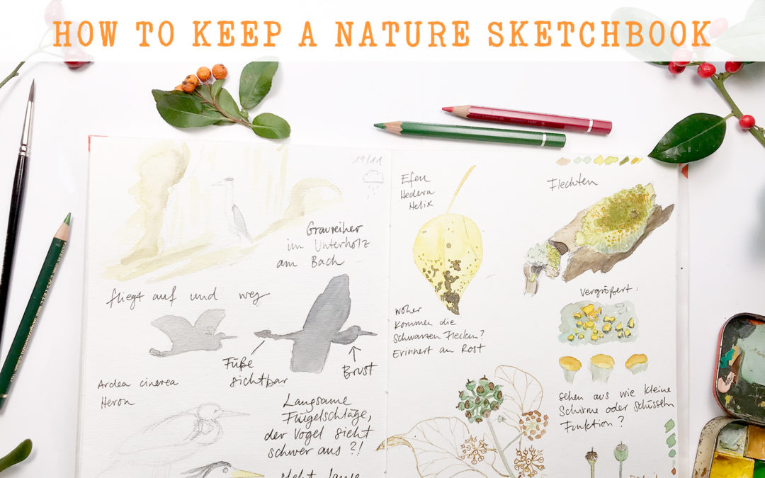 How to keep a nature sketchbook – new class