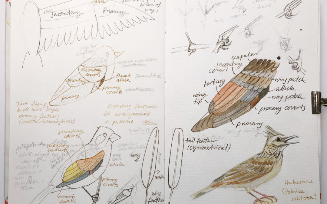 Different Sketchbook Styles – Methods For Observing And Drawing In Your Nature Journal
