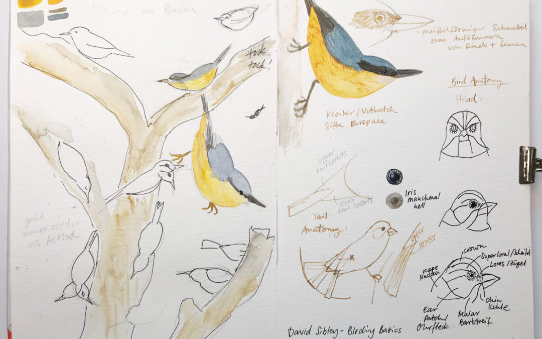 How a nature sketchbook can help you to experience nature and get better at observing and drawing