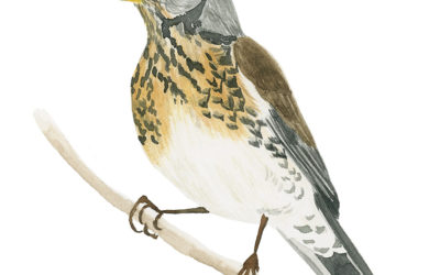 How To Paint A Fieldfare In Watercolor – Bird Painting (Video Tutorial)