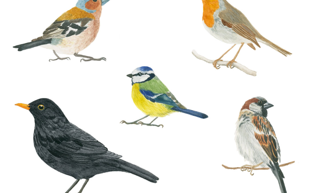 Common European Birds – An Ongoing Painting Project