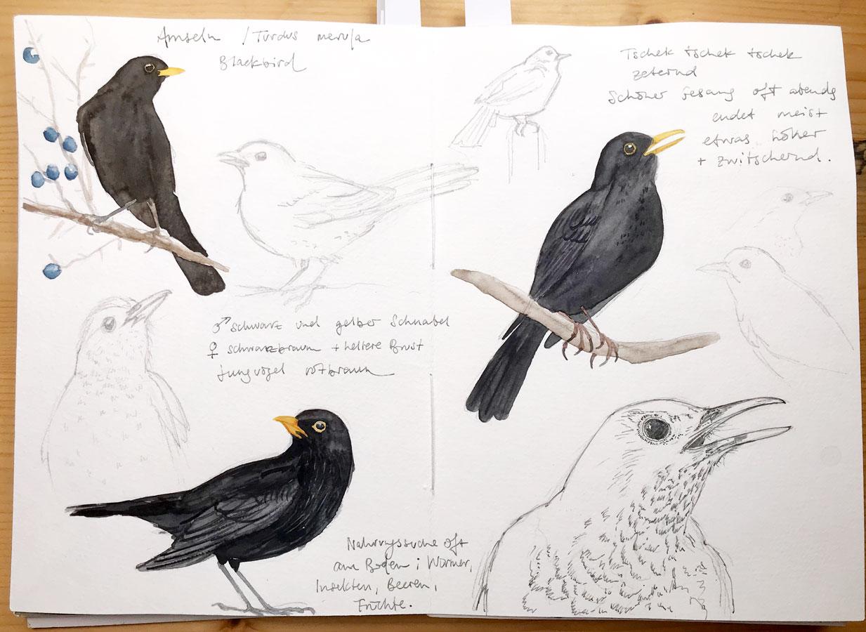 My Sketchbook in February 2019