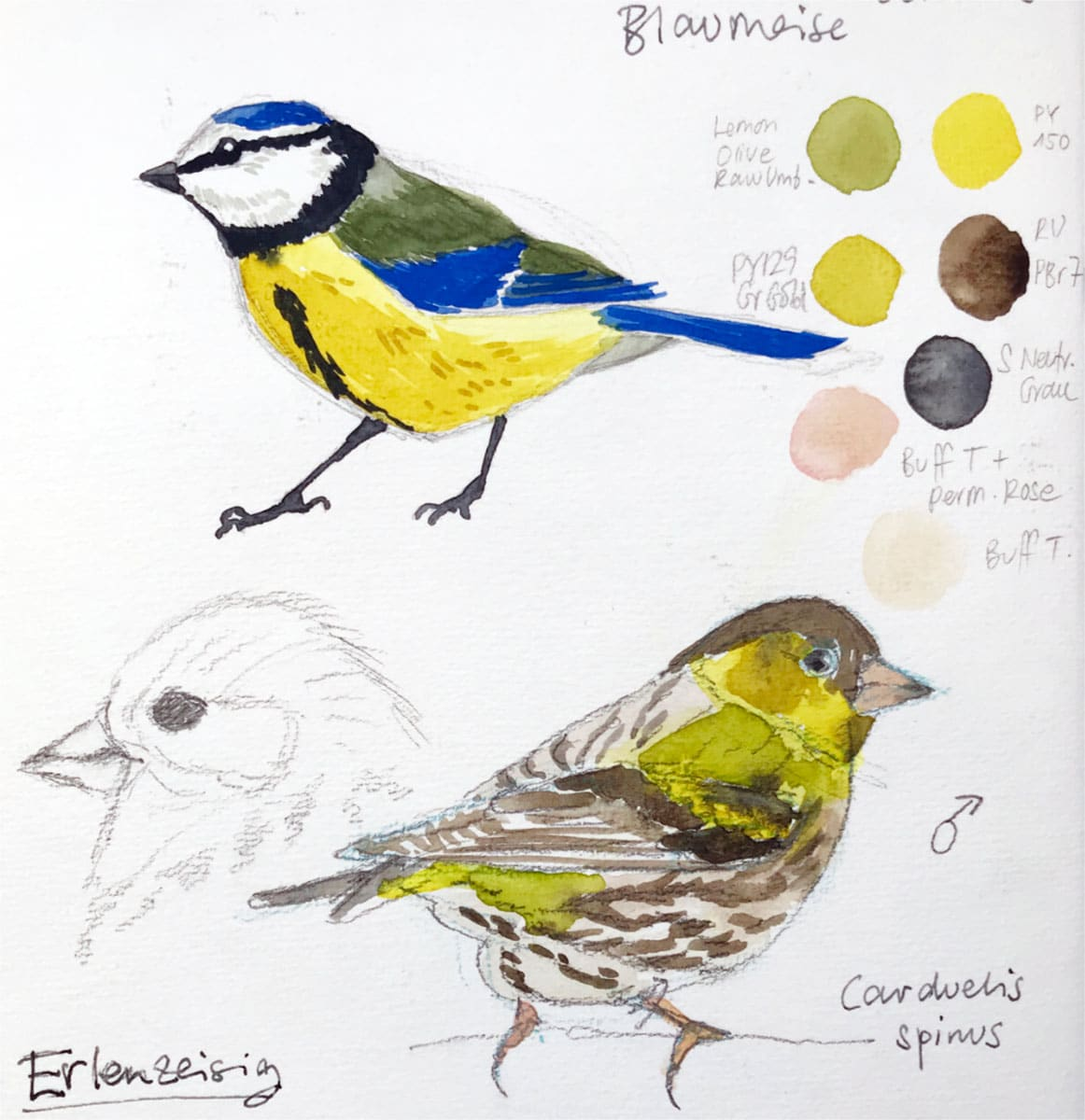 How To Draw Birds – 5 Tips For Better Bird Drawings