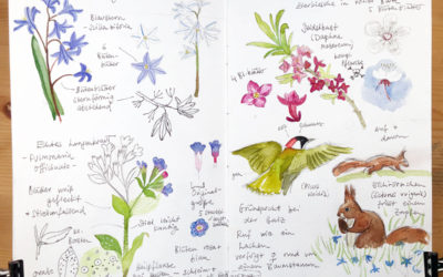 Why I Love Nature Journaling With Watercolors