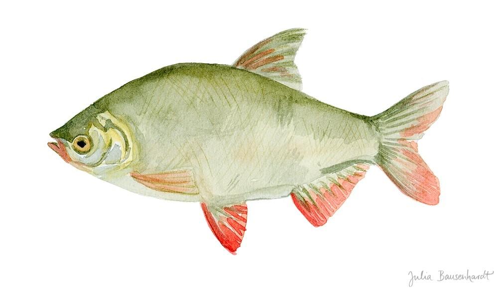 Red-eye in watercolor