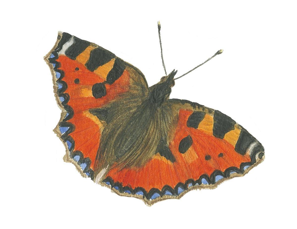 Small tortoiseshell butterfly in watercolor